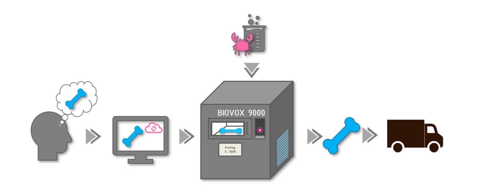 The BIOVOX value chain