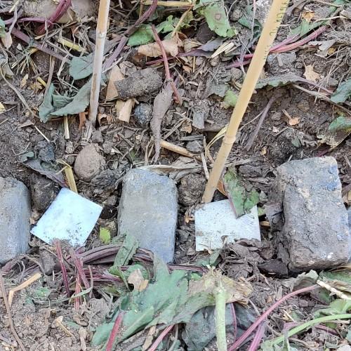 Bioplastik Kompost